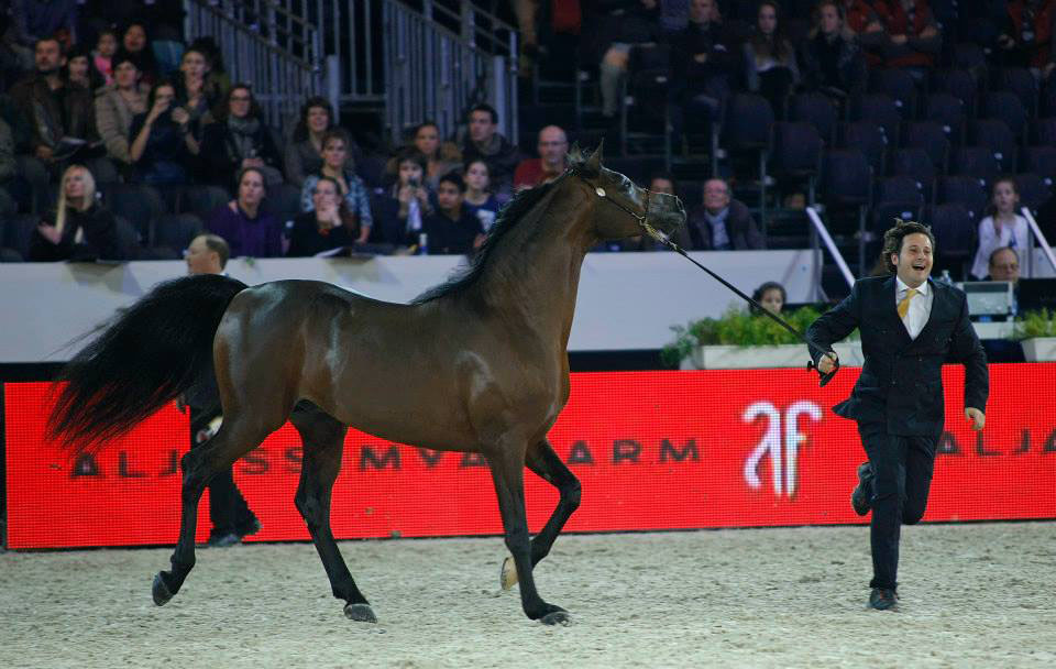 EURYDICE x SALON DU CHEVAL 2014